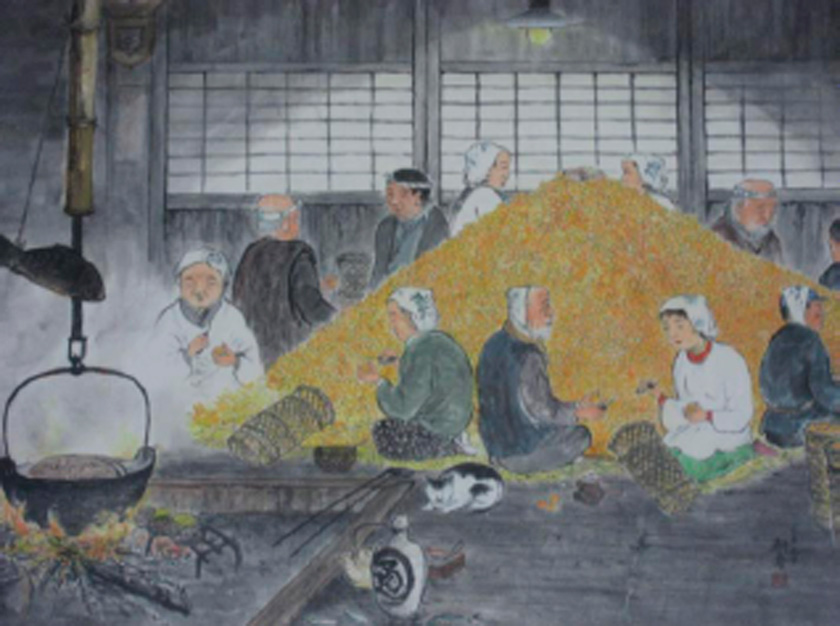 Fig. VIII People peeling persimmons. There is a bowl placed at the top of the pile with snacks inside as a reward for the workers.  Post WWII by Higo Koujyu held at Miho Community Centre.