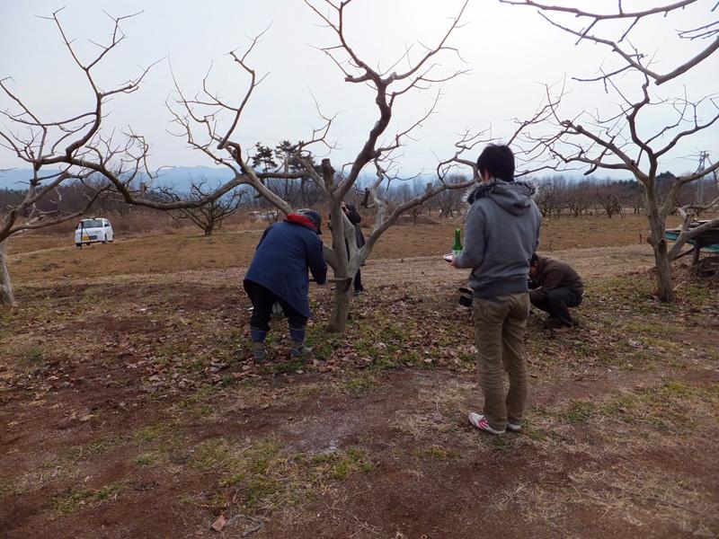 小正月行事の「成り木責め(柿の木打ち)」を実施