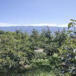 柿畑(9月下旬)