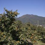 柿畑と風越山(10月下旬・飯田市北方地区)