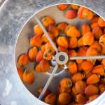 柿もみの行程(12月中旬)柿もみ機で回転