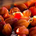 柿もみ行程後の陰干し(12月中旬)