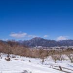 風越山と積雪の中の柿畑(1月)