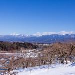 中央アルプスの山並みと積雪の中の柿畑(1月)