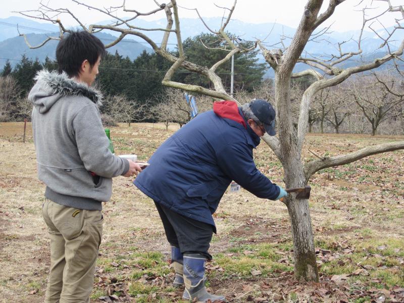 成り木責め | 市田柿 〜 プレミアム・ドライ・フルーツ 〜
